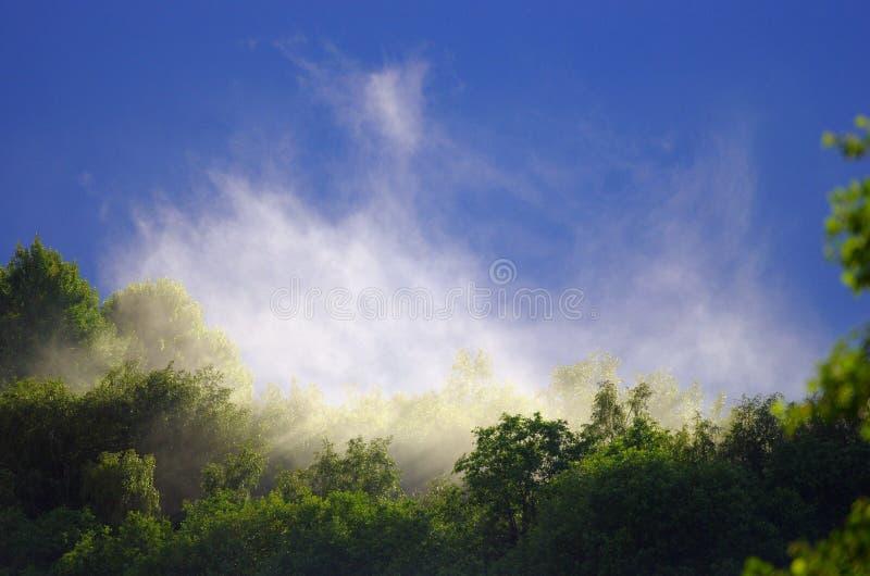 Le brouillard se lève au-dessus de la forêt après la pluie pendant l'été images stock