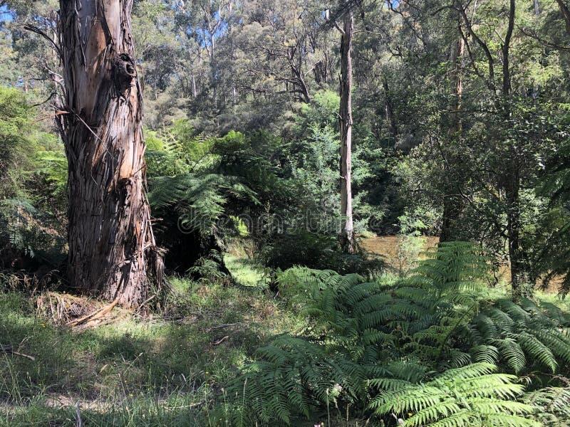 Le bushland le long de la rivière de Jamieson image stock