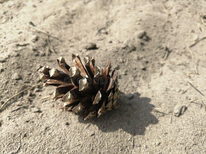Le cône de pin se trouve sur l'à sable jaune images libres de droits