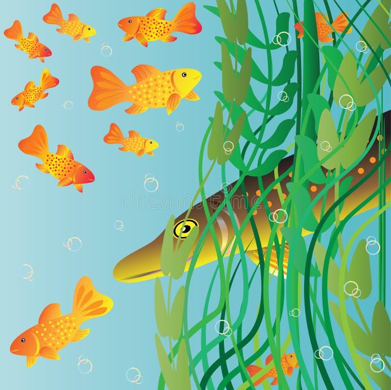 Le cacce del luccio sui piccoli pesci. immagine stock