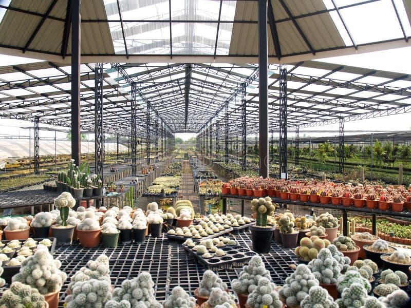 Le cactus dans le jardin image libre de droits
