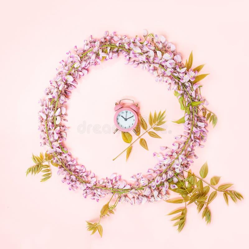 Le cadre de cercle du réveil rose et les belles fleurs de glycine s'embranchent avec des bourgeons de fleurs sur le fond rose photo libre de droits