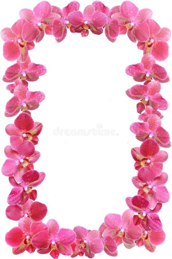 Le cadre de photo de l'orchidée fleurit avec des baisses de rosée image libre de droits