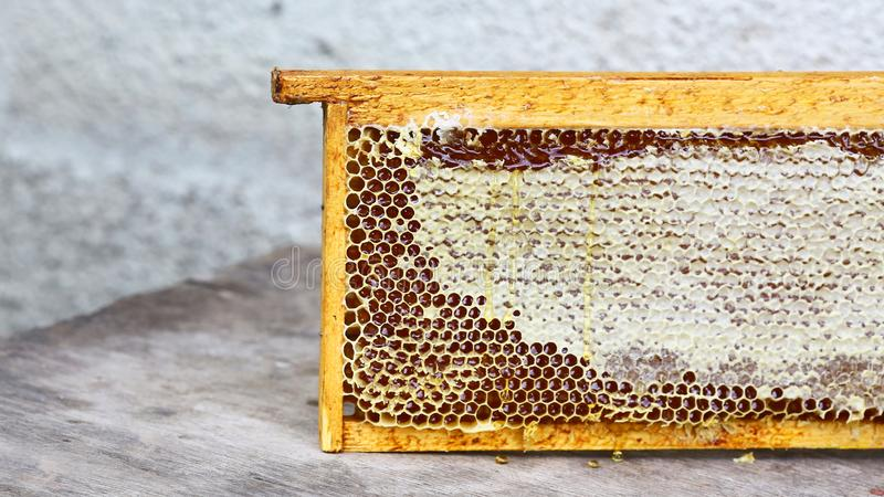 Le cadre de ruche de rucher avec des abeilles cirent la structure complètement du miel frais d'abeille en nids d'abeilles D'isole images stock