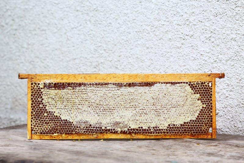Le cadre de ruche de rucher avec des abeilles cirent la structure complètement du miel frais d'abeille en nids d'abeilles D'isole image stock