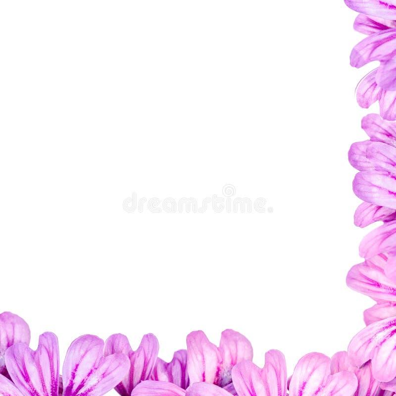 Le cadre floral de p?tales violets, pr?parent pour une carte d'amour images stock