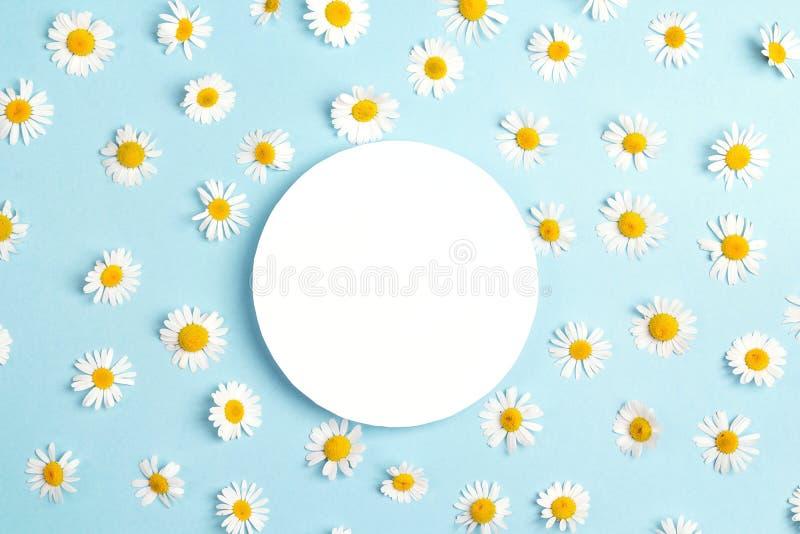 Le cadre rond vide avec la camomille fleurit sur le fond bleu cop images libres de droits