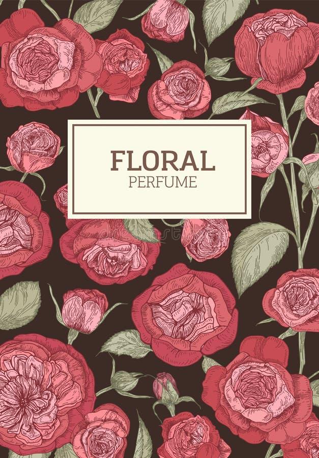 Le calibre floral d'insecte ou d'affiche décoré par l'anglais rouge a monté des fleurs sur le fond foncé Vecteur réaliste botaniq illustration stock
