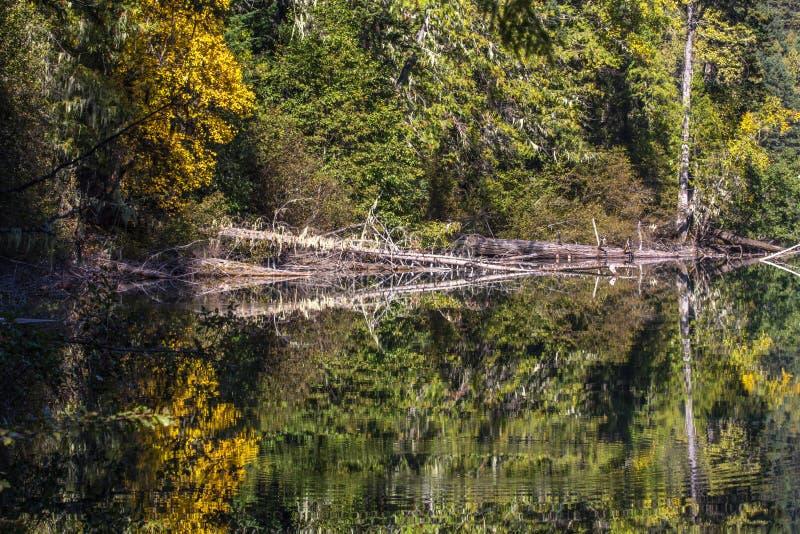 Le calme parfait du lac birkenhead près de Whistler et de Pemberton, crée AVANT JÉSUS CHRIST des réflexions jaunes et vertes photos stock