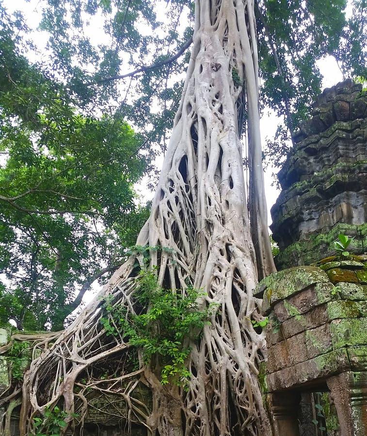 Le Cambodge photographie stock libre de droits
