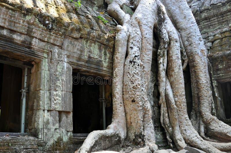 Le Cambodge - détail de temple de Prohm de ventres photo libre de droits