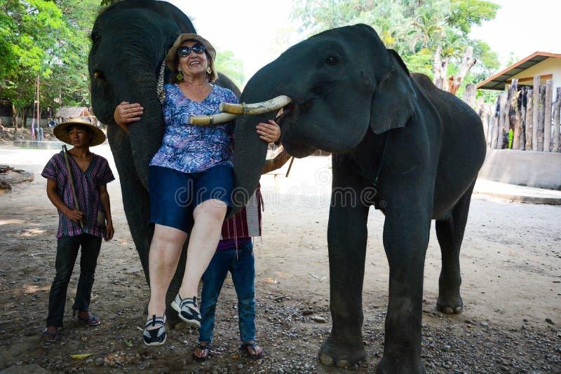 Le camp d'éléphant de Maetaman en Chiang Mai, Thaïlande photos libres de droits