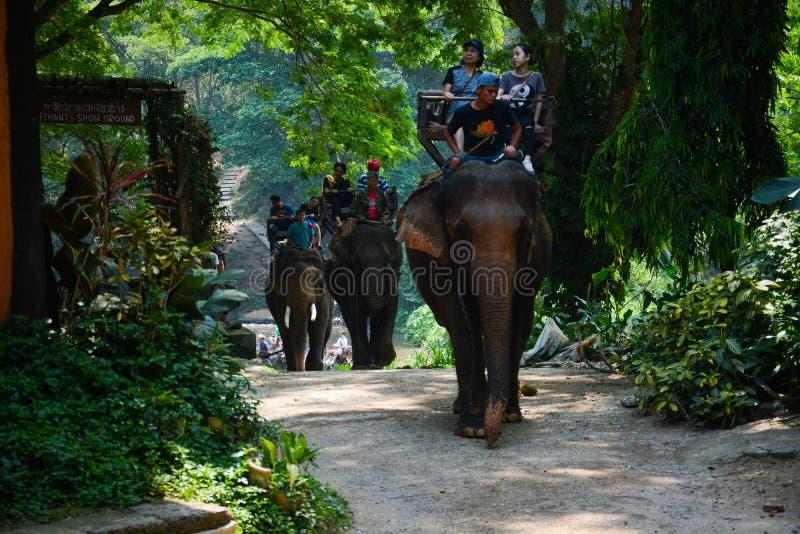 Le camp d'?l?phant de Maetaman en Chiang Mai, Tha?lande photos libres de droits