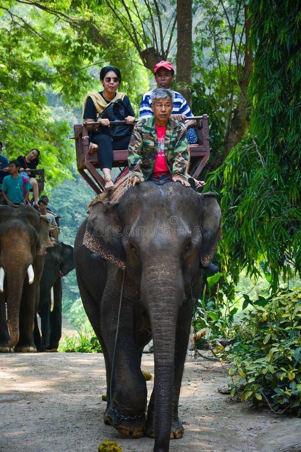 Le camp d'?l?phant de Maetaman en Chiang Mai, Tha?lande photo libre de droits