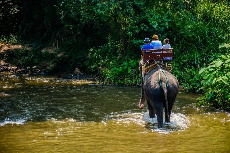 Le camp d'?l?phant de Maetaman en Chiang Mai, Tha?lande photo stock