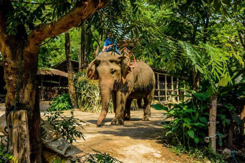 Le camp d'?l?phant de Maetaman en Chiang Mai, Tha?lande image stock