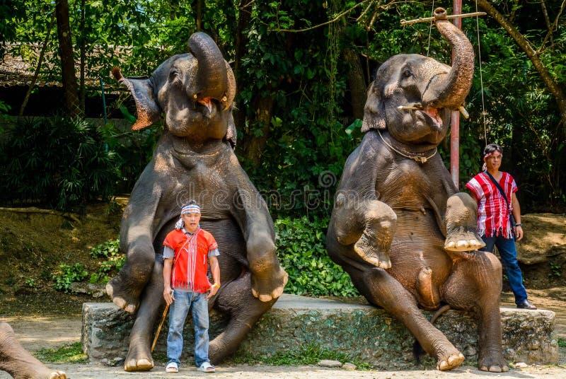 Le camp d'?l?phant de Maetaman en Chiang Mai, Tha?lande photos stock