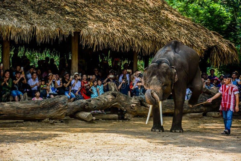 Le camp d'?l?phant de Maetaman en Chiang Mai, Tha?lande photographie stock