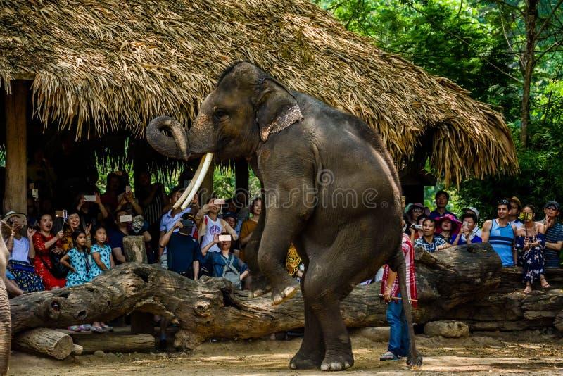 Le camp d'?l?phant de Maetaman en Chiang Mai, Tha?lande images stock