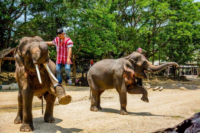 Le camp d'?l?phant de Maetaman en Chiang Mai, Tha?lande images libres de droits