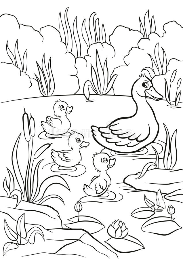 Le canard aimable et les petits canetons mignons gratuits nagent sur le lac illustration stock