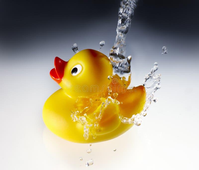 Le canard en caoutchouc obtient la douche images libres de droits
