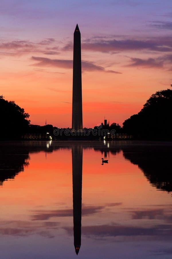 Le canard nage au lever de soleil un matin calme à la piscine se reflétante, Washington Monument, C.C avec la réflexion du point  photo libre de droits