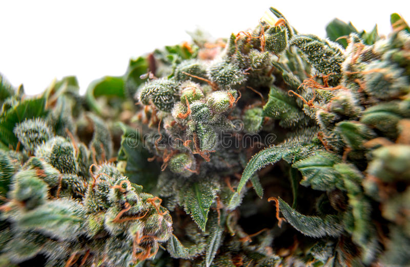 Le cannabis bourgeonne le fond photo stock