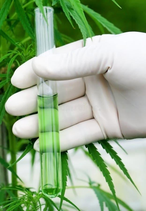 Le cannabis estraggono in provetta immagini stock libere da diritti