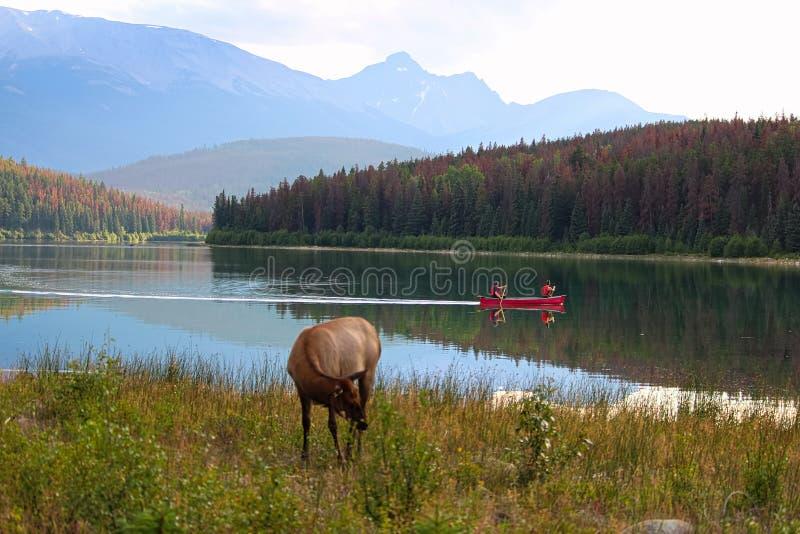 Le canoe godono delle montagne rocciose con fauna selvatica sulla riva fotografie stock