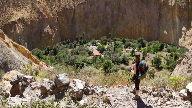 Le canyon de Colca au Pérou du sud - vue de l'oasis de Sangalle au fond du canyon photo stock