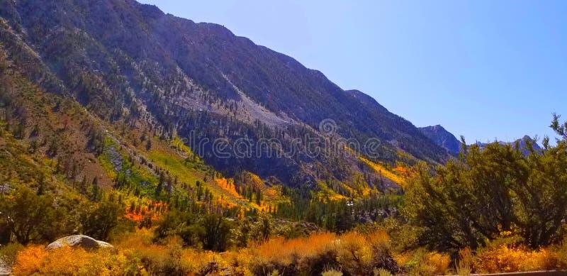 Le Canyon est vivant de couleur images stock