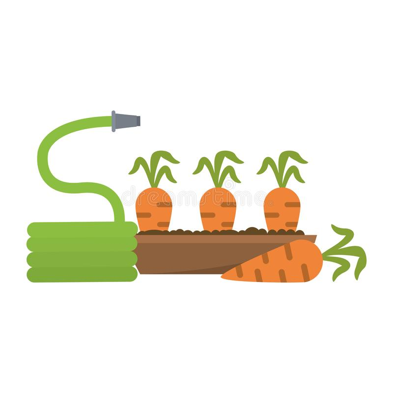 Le carote raccolgono e annaffiano illustrazione di stock