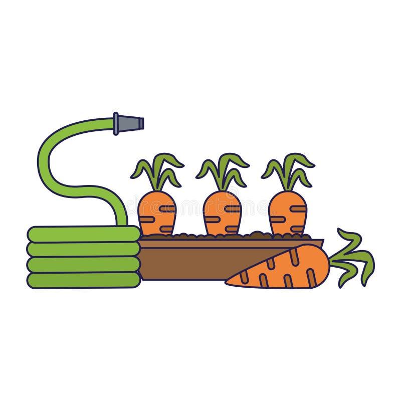 Le carote raccolgono e annaffiano le linee blu royalty illustrazione gratis