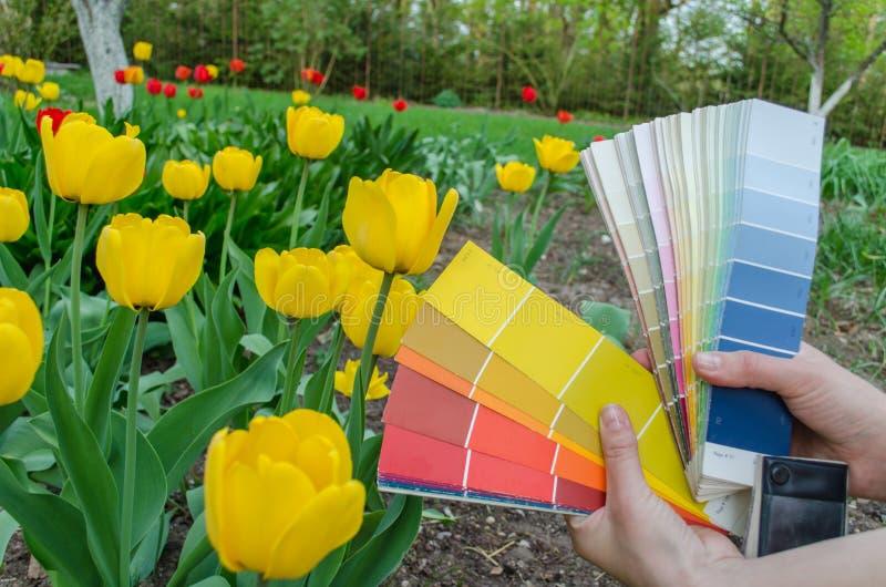 Le carte della tavolozza di colore scelgono dal tulipano di giallo di colore fotografia stock