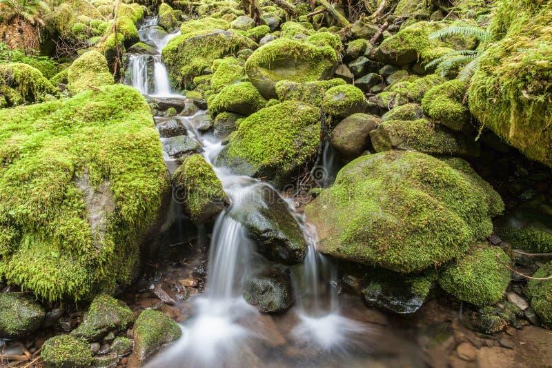 Le cascate attraverso muschio hanno coperto le rocce fotografia stock libera da diritti