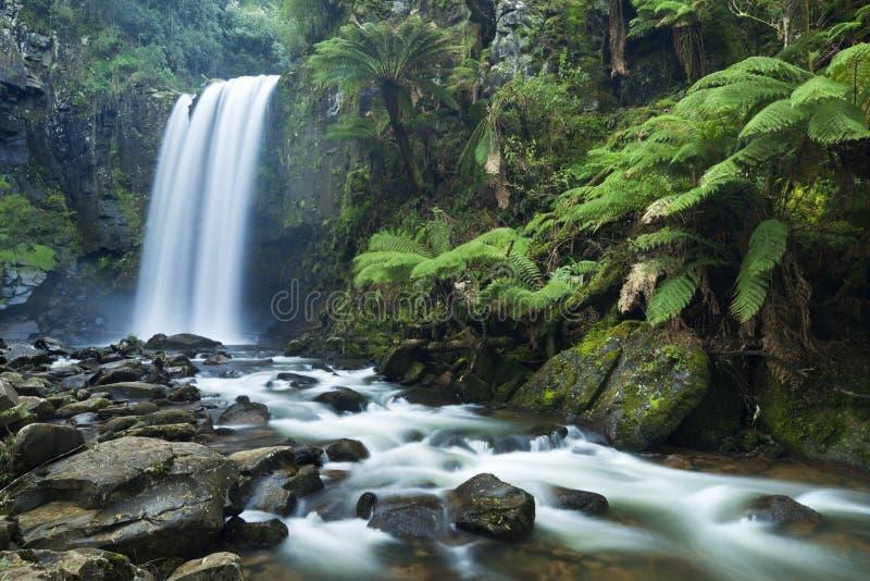 Le cascate della foresta pluviale, Hopetoun cade, grande Otway NP, Victoria, immagini stock libere da diritti