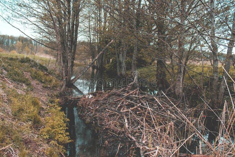 Le castor a construit le barrage Nature de latvian de regard de vintage image stock