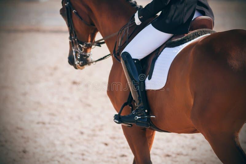 Le cavalier est assis dans la selle sur un cheval gracieux servant dans la compétition de dressage image stock