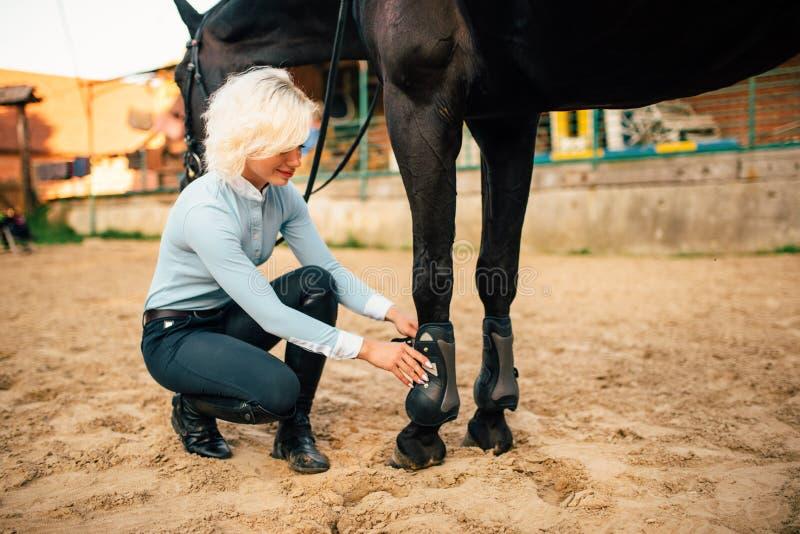 Le cavalier féminin préparent son cheval brun marcher images libres de droits