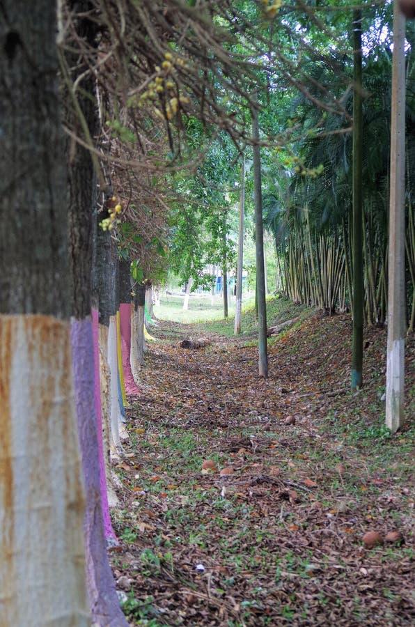 Le ceiba atlantique Honduras de La de route a coloré la ligne d'arbre le bord de la route 2 image stock