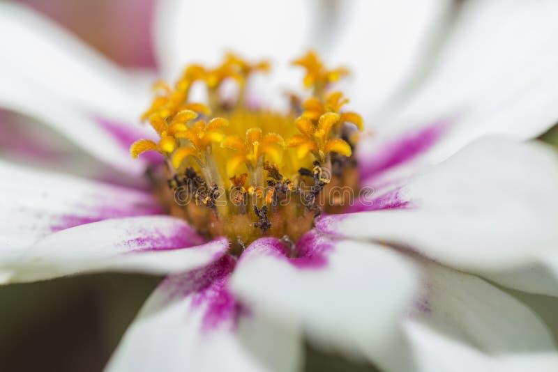 Le centre d'une fleur photos libres de droits
