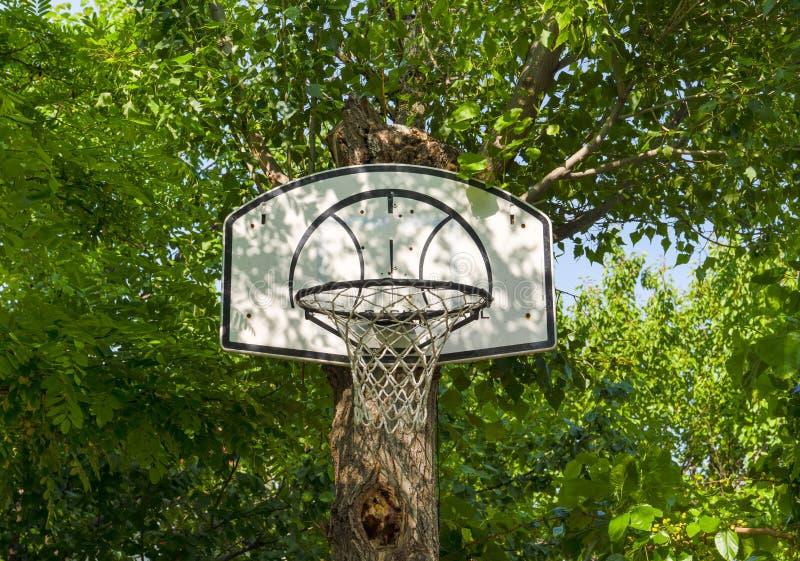 Le cercle de basket-ball accroché dessus a attaché un tronc d'arbre vert photo libre de droits