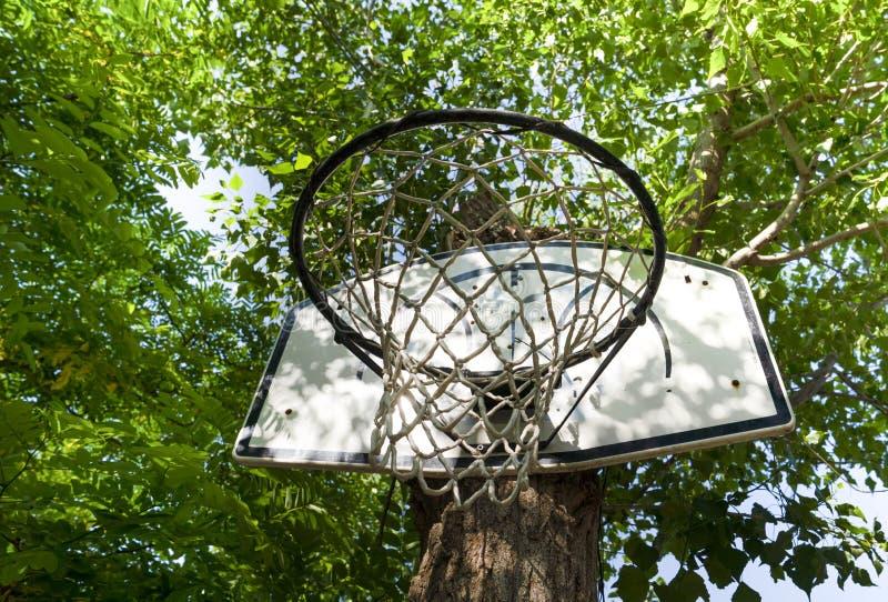 Le cercle de basket-ball accroché dessus a attaché un tronc d'arbre vert images stock