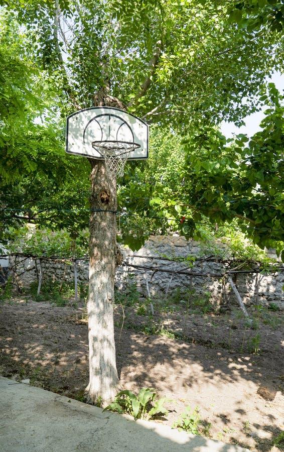 Le cercle de basket-ball accroché dessus a attaché un tronc d'arbre vert photo stock