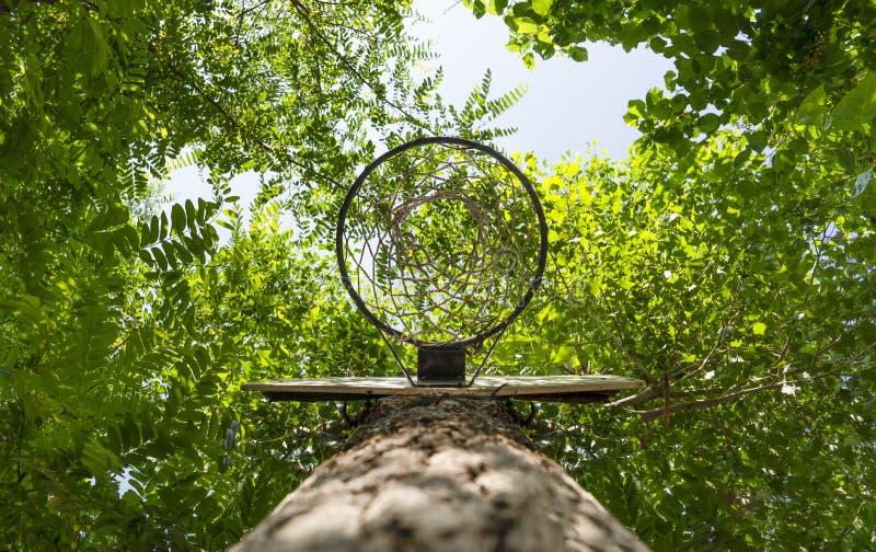 Le cercle de basket-ball accroché dessus a attaché un tronc d'arbre vert, de dessous, la vue inférieure photo libre de droits