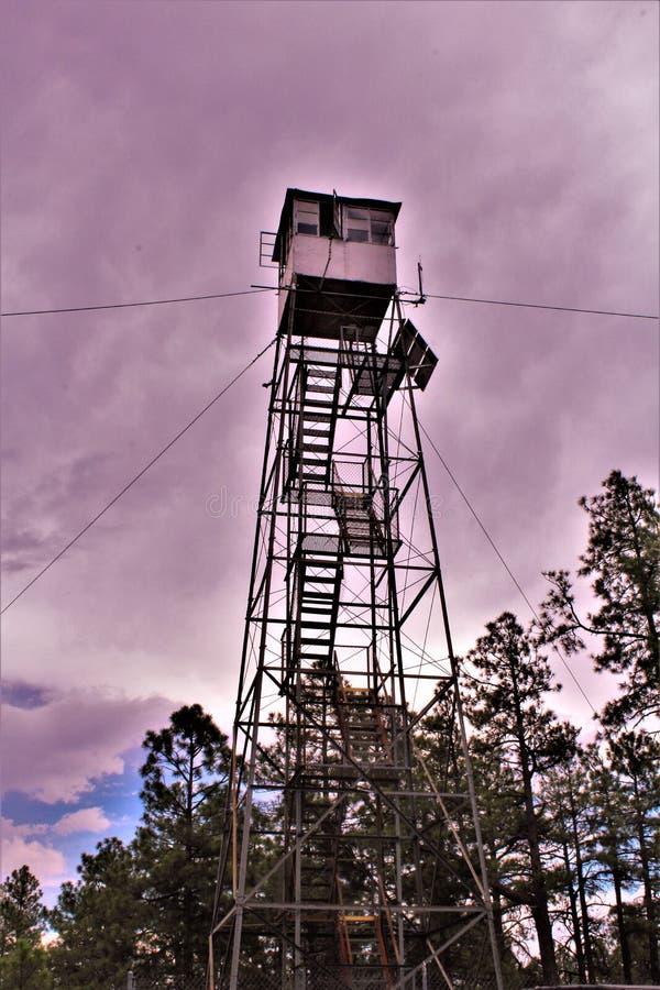 Le cerf commun jaillit Outlook, réserve forestière d'Apache Sitgreaves, le comté de Navajo, Arizona, Etats-Unis photographie stock libre de droits