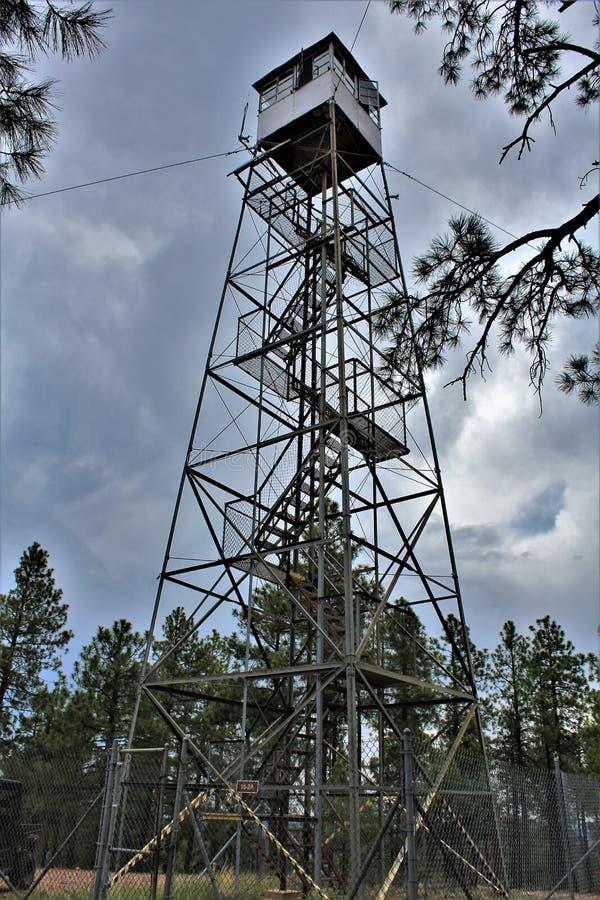 Le cerf commun jaillit Outlook, réserve forestière d'Apache Sitgreaves, le comté de Navajo, Arizona, Etats-Unis images stock