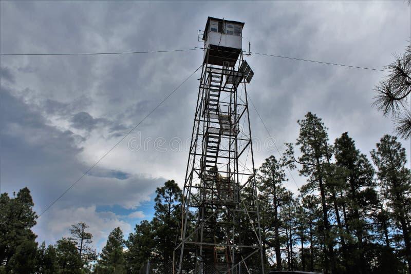 Le cerf commun jaillit Outlook, réserve forestière d'Apache Sitgreaves, le comté de Navajo, Arizona, Etats-Unis image libre de droits