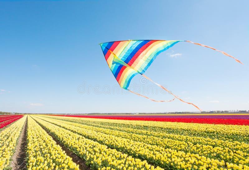 Le cerf-volant de vol et la belle tulipe jaune et rouge met en place photos libres de droits
